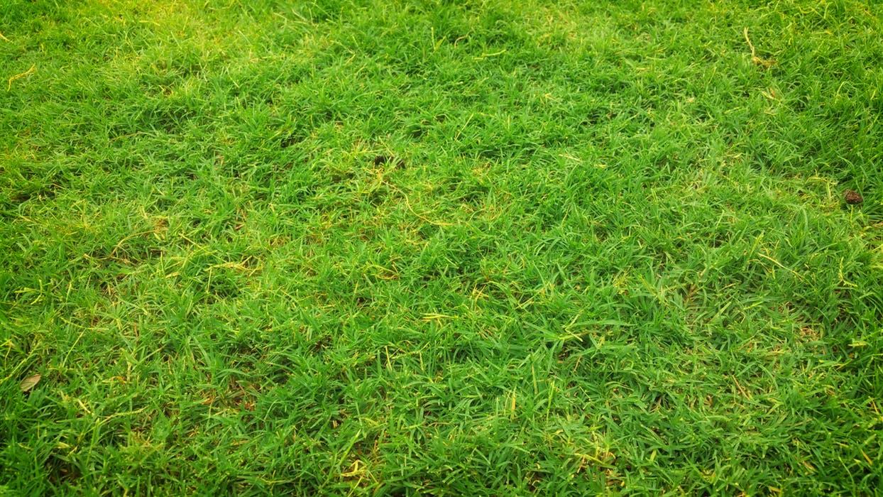 Fake grass in Sydney